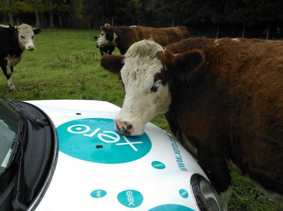Cows galore? Xero Farming Roadshow – NZ